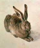 Hare, c.1502 Giclée-Premiumdruck von Albrecht Dürer