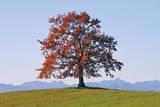 Der Baum Premium Giclee Print by Gerhard Rossmeissl