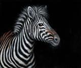 Zebra II Premium Giclee Print by Jutta Plath