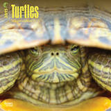 Turtles - 2015 Calendar Calendars