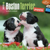 Boston Terrier Puppies - 2015 Mini Calendar Calendars