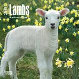 Lambs - 2015 Mini Calendar Calendars