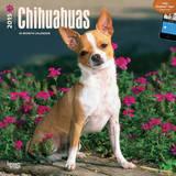 Chihuahuas - 2015 Calendar Calendars