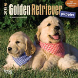 Golden Retriever Puppies - 2015 Mini Calendar Calendars