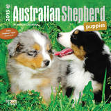 Australian Shepherd Puppies - 2015 Mini Calendar Calendars