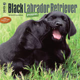 Black Labrador Retriever Puppies - 2015 Calendar Calendars