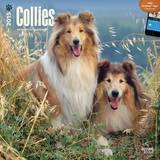Collies - 2015 Calendar Calendars