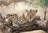In the Acacia Tree Reproduction giclée Premium par Renato Casaro