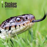 Snakes - 2015 Calendar Calendars