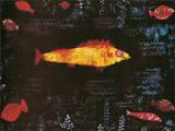 Der Goldene Fisch Premium Giclee Print by Paul Klee