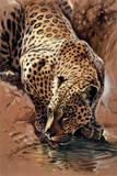 Leopard's Sundowner Reproduction giclée Premium par Renato Casaro