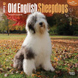 Old English Sheepdogs - 2015 Calendar Calendars
