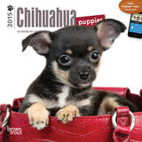 Chihuahua Puppies - 2015 Mini Calendar Calendars