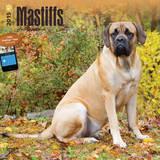 Mastiffs - 2015 Calendar Calendars