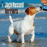 Jack Russell Terriers - 2015 Calendar Calendars