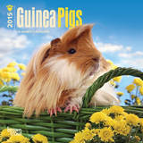 Guinea Pigs - 2015 Mini Calendar Calendars