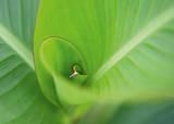 Leaf II Premium Giclee Print by Ortwin Klipp