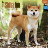 Shiba Inu - 2015 Calendar Calendars