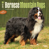 Bernese Mountain Dogs - 2015 Calendar Calendars