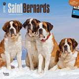 Saint Bernards - 2015 Calendar Calendars