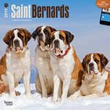 Saint Bernards - 2015 Calendar Calendars