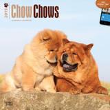 Chow Chows - 2015 Calendar Calendars