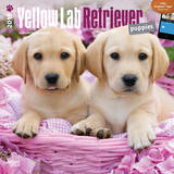 Yellow Labrador Retriever Puppies - 2015 Calendar Calendars