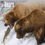 Bears - 2015 Calendar Calendars