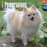 Pomeranians - 2015 Calendar Calendars