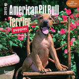 American Pit Bull Terrier Puppies - 2015 Mini Calendar Calendars