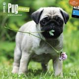 Pug Puppies - 2015 Calendar Calendriers