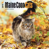Maine Coon Cats - 2015 Calendar Calendars