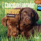 Chocolate Labrador Retriever Puppies - 2015 Mini Calendar Calendars