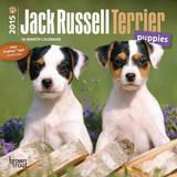 Jack Russell Terrier Puppies - 2015 Mini Calendar Calendars