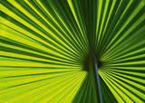 Leaf I Premium Giclee Print by Ortwin Klipp