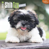 Shih Tzu Puppies - 2015 Calendar Calendars