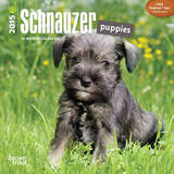 Schnauzer Puppies - 2015 Mini Calendar Calendars