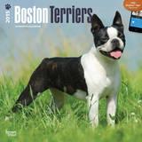 Boston Terriers - 2015 Calendar Calendriers