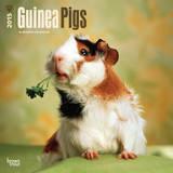 Guinea Pigs - 2015 Calendar Calendriers