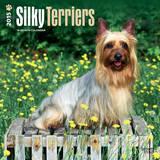 Silky Terriers - 2015 Calendar Calendars