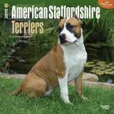 American Staffordshire Terriers - 2015 Calendar Calendars