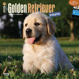 Golden Retriever Puppies - 2015 Calendar Calendars