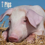 Pigs - 2015 Calendar Calendars
