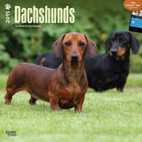 Dachshunds - 2015 Calendar Calendars