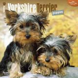 Yorkshire Terrier Puppies - 2015 Calendar Calendars
