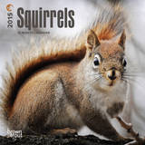 Squirrels - 2015 Mini Calendar Calendars