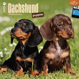 Dachshund Puppies - 2015 Calendar Calendars