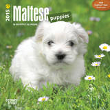 Maltese Puppies - 2015 Mini Calendar Calendars