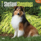 Shetland Sheepdogs - 2015 Calendar Calendars