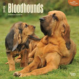 Bloodhounds - 2015 Calendar Calendars